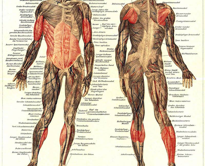The secondary-muscles