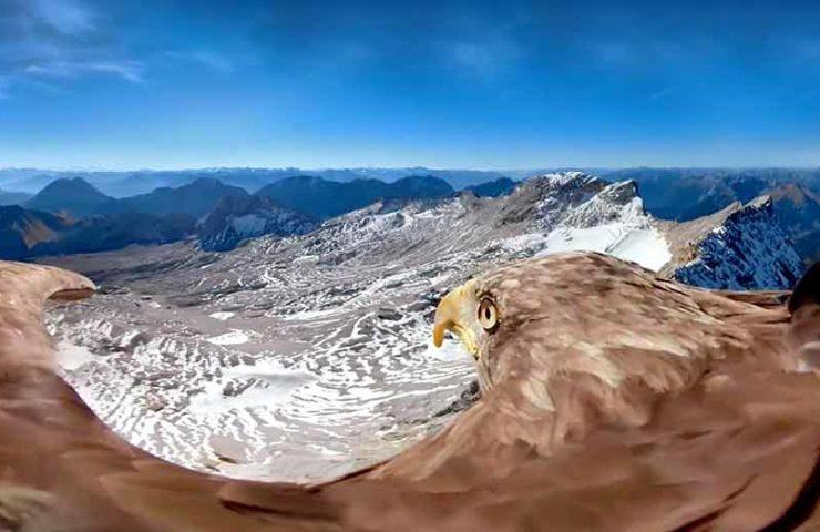 Spektakuläre-Aufnahmen-eines-Adlerfluges-über-die-Zugspitze.jpg