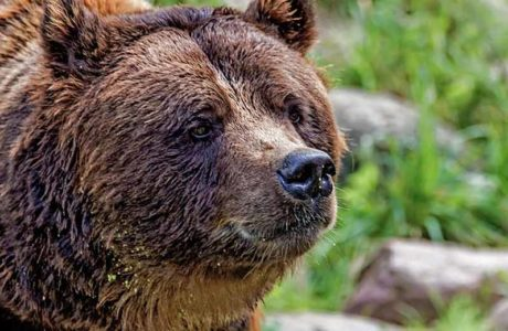 Two people attacked by brown bear in the Dolomites
