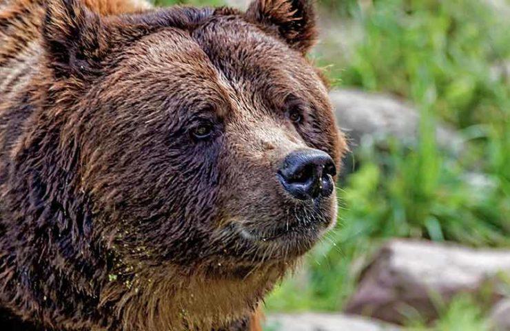 Zwei Personen in den Dolomiten von Braunbär angegriffen